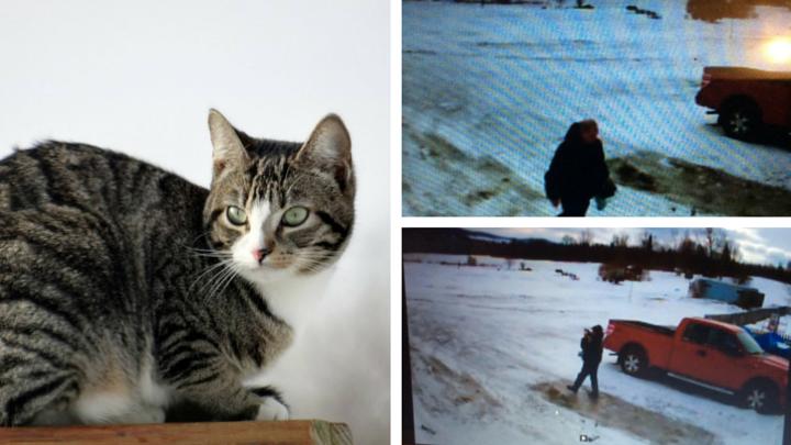 Troy Vermont Cat Burglar