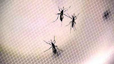 Zika-mosquitos-not-for-media-gallery-JPG_20160201134002-159532
