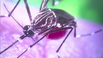 Zika-mosquito_20160305043006-159532