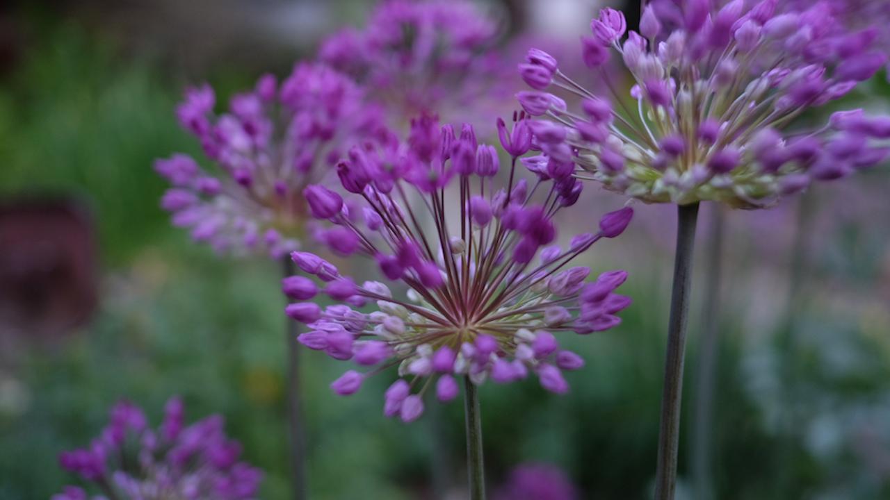 Flowers_1464355620357.jpg
