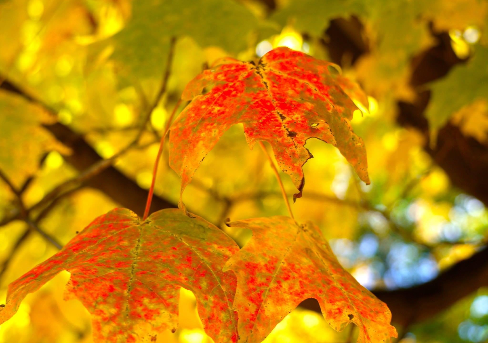 foliage_1474649269508.jpg