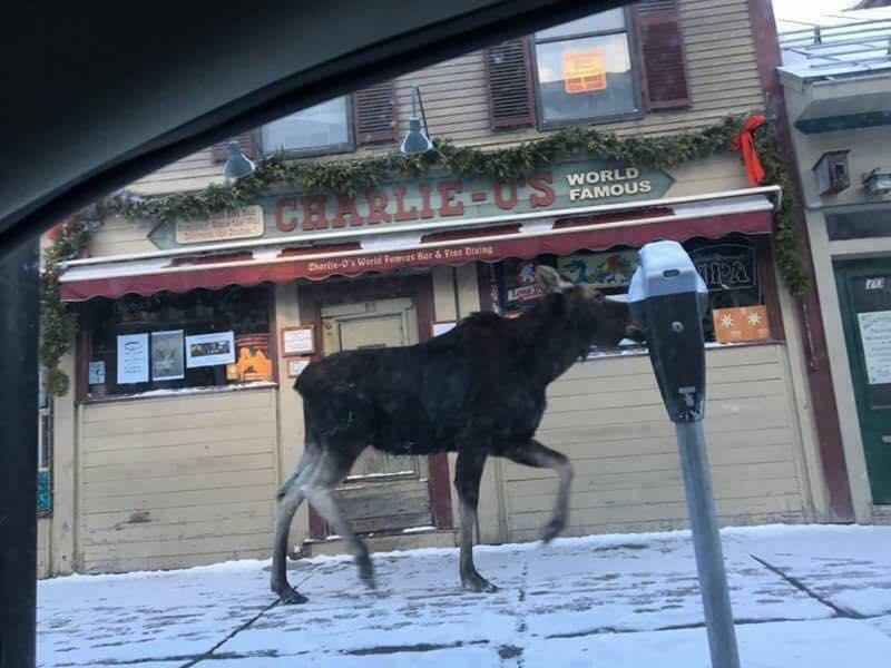 moose montpelier police department.jpg