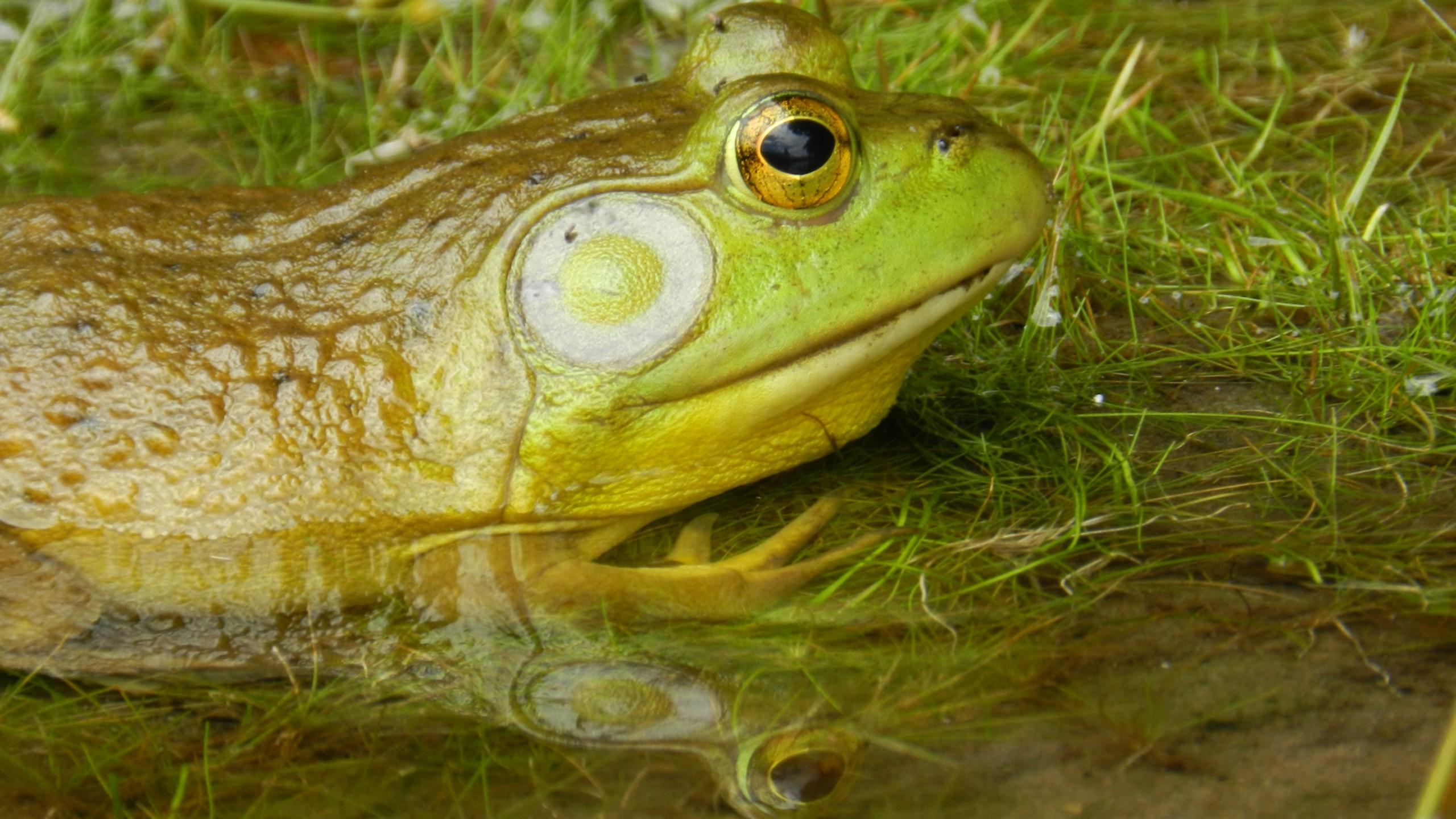 Frog_1491242490543.JPG
