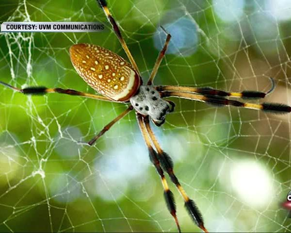 Spider Power