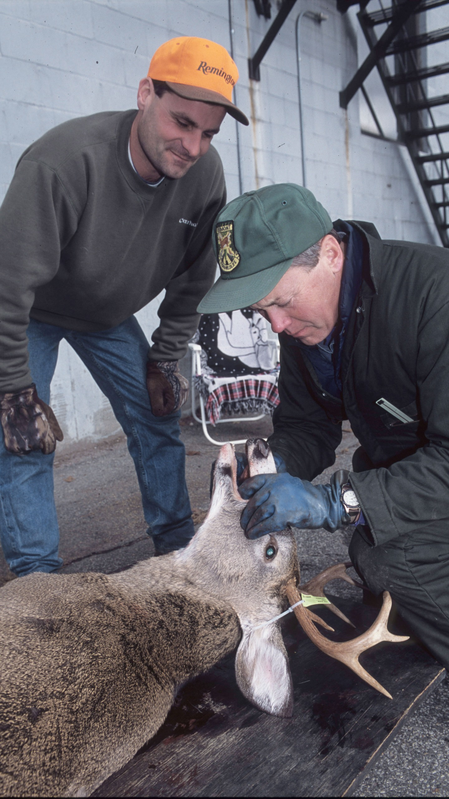 Deer Check Station_1506446168266.jpg