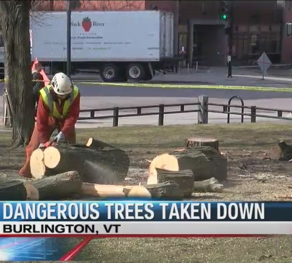 Dangerous trees chopped down in City Hall Park