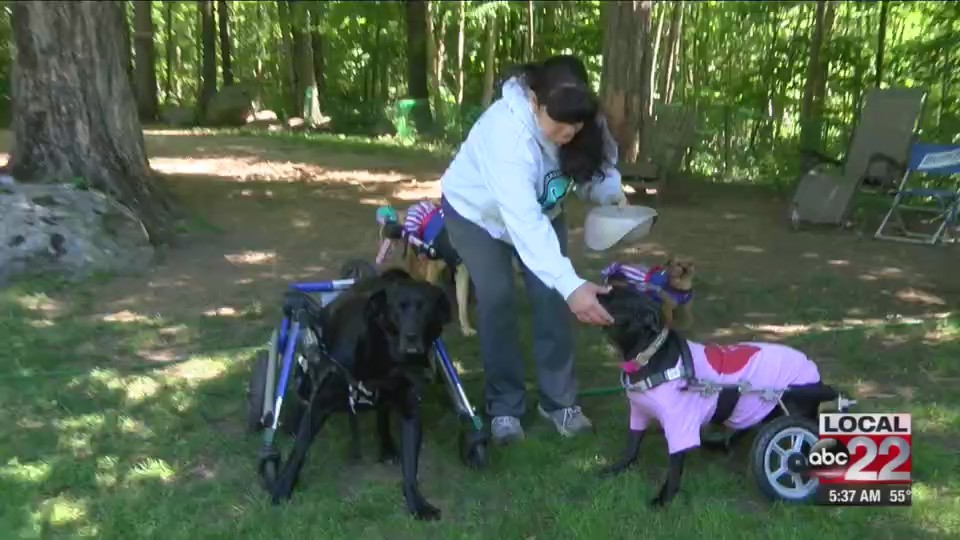 A Mendon woman gives disabled dogs a better life