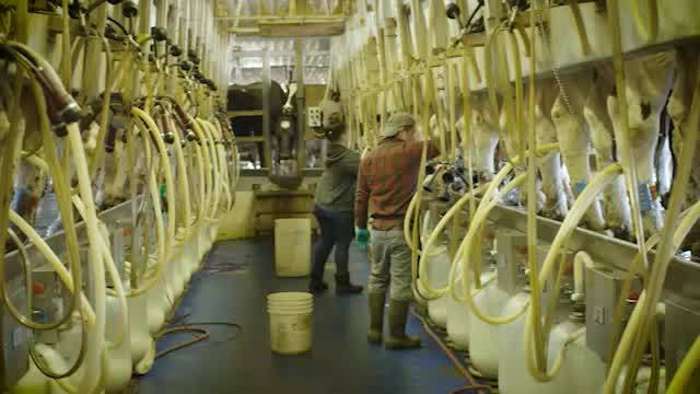 Dairy_History_Month___Milking_Process_0_20180518203943
